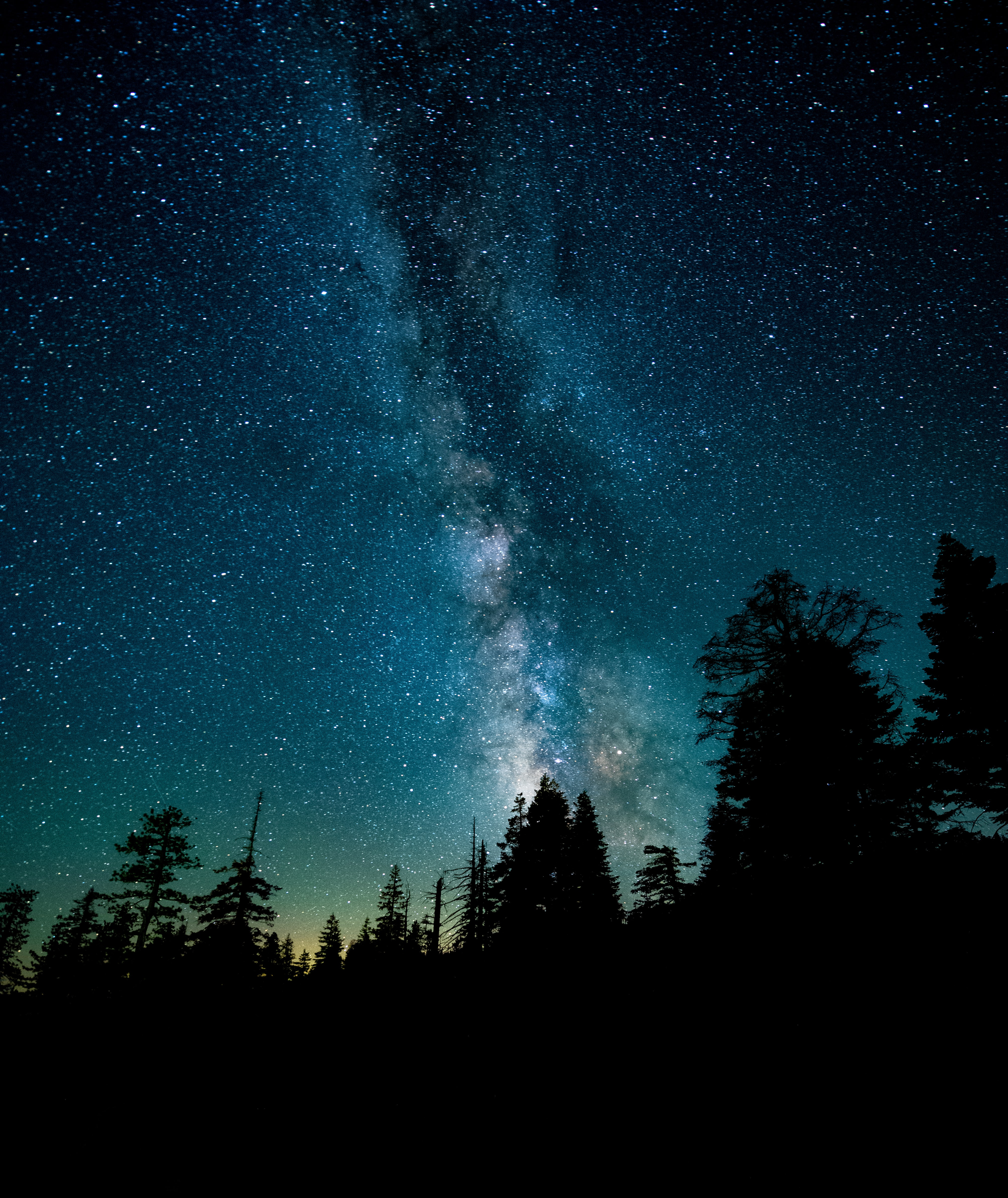 The Milky Way stands out clearly in the night sky over a forest.