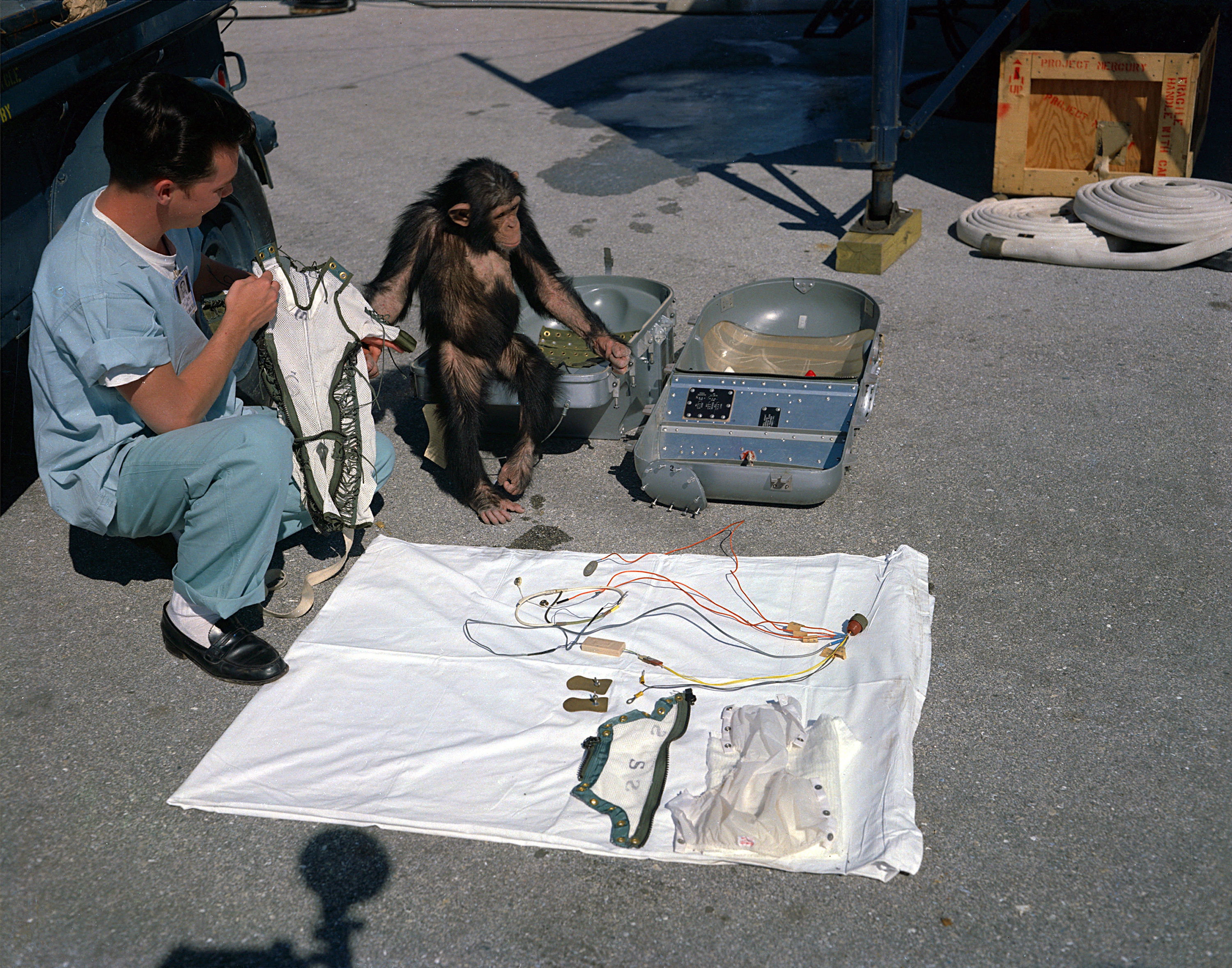 The astrochimp HAM checks out his equipment before flight